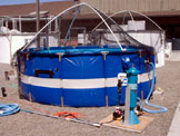 Portable rehab pool fitted with test filter (Greg Massey)
