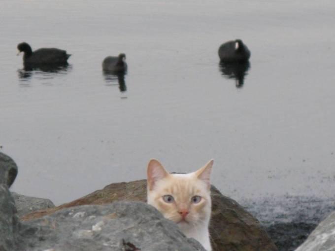 cat with birds