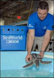 SeaWorld sea turtle rescue thedisneyblog.com