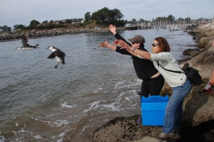 Emily and Kyra release clean murres near Santa Cruz.