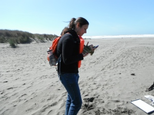 Marine Mammal Wildlife Recovery personnel recording data during recovery of oiled harbor seal during drill
