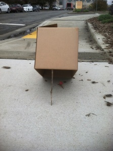 The Chief Operating Officer for the Wildlife Health Center put together a bunny trap - nothing could possibly go wrong!