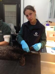 Cindy Serraino from the Monterey Bay Aquarium