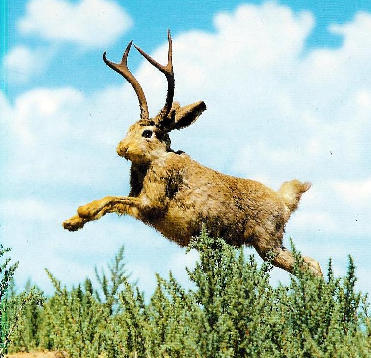 leaping-jackalope