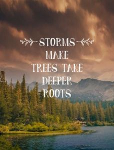 storms-make-trees-take-deeper-roots-11psh28