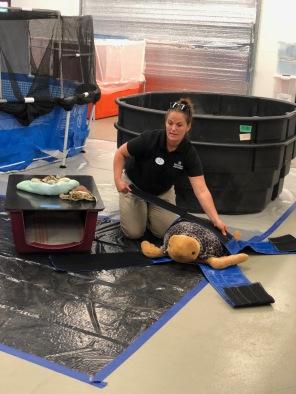 EOW Turtle Workshop