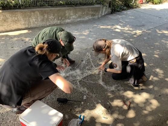 Alcatraz net